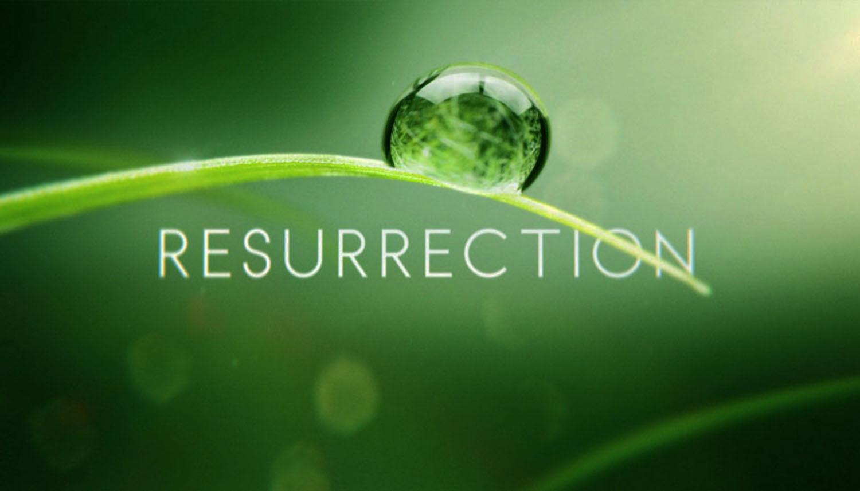 부활초록.jpg